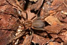 dedetizadora aranhas